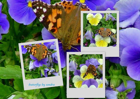 butterflys collage