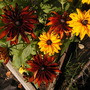 SE Corner of the Bed (Rudbeckia hirta (Black-eyed Susan))