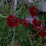 plants_and_holiday_2009_021.jpg