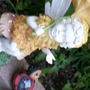 plants_and_holiday_2009_026.jpg