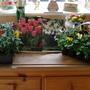 Bulbs and flowers!