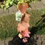 Vitis_black_outdoor_grape