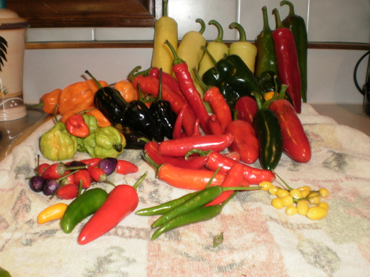 some peppers I picked