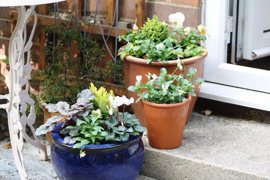 3 more winter pots