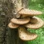 Bracket_on_tree