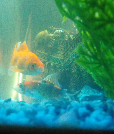 "My 1st Two Fishys :) ""Blog"""