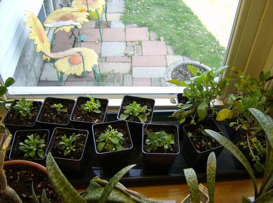 Seedlings April 2008