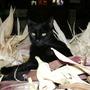 Cat in Corn husks