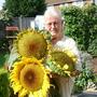 My Sunflower heads
