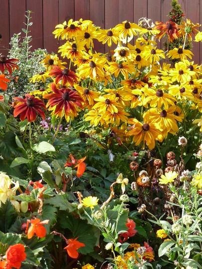 Beautiful Autumn planting (Coneflowers.....Rudbeckia)