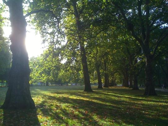 Sunriseand_shadows__Hyde_Park_121009.jpg
