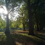 Sunriseand_shadows_4_hyde_park_121009