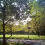 Sunrise_through_the_trees_Hyde_Park_121009.jpg