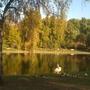 Heron_in_St_James_Park_121009.jpg