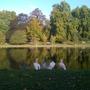 Herons_in_St_James_Park_121009.jpg