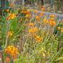 Plant_pics_10_12_09_060