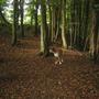 Merlin in the woods