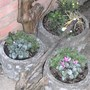 Winter Pots