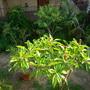 Plant_pics_10_12_09_007