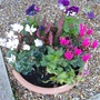 Winter pots in front garden........