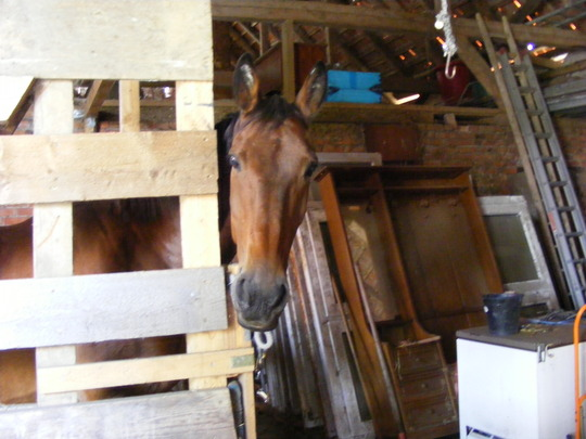 Welcome to my shed /  barn  (clearance)