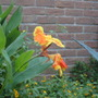Pretty yellow and orange flower.
