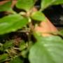 My tiny red impatiens seem impatient to flower...