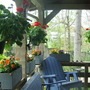 Porch Flowers 2