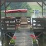 Dock Flowers