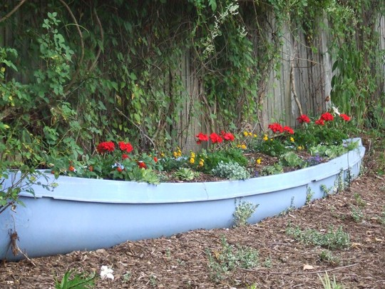 Geraniums in canoe