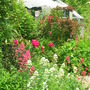 A bed in my garden (mainly self seeded pretty weeds!)