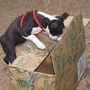 Stella and the Jackson & Perkins Rose Box
