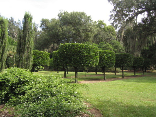 Sculptured trees