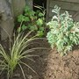 New_plants_001