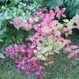 Autumn_colour_003
