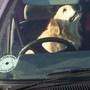 Sacha driving