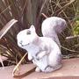 Sqiuirrel