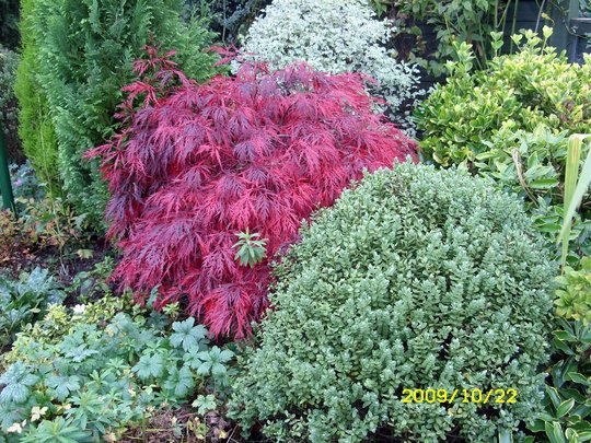 Autumn Shrubs