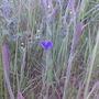 Blue Butterfly-Summer '08