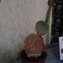 Final one of six Cacti
