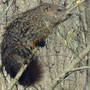 See Bird on Ground Hog's Back