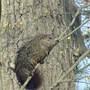Bird, Ground Hog, and Squirrel