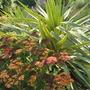 Autumn Joy Sedum & Marguerittaville Yucca