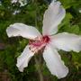 Plant_pics_10_18_09_026