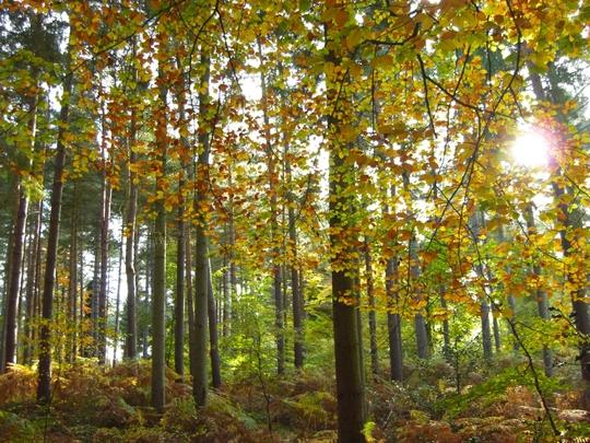 Virginia_Water_Trees_and_sunlight_Best.jpg