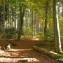 Woodland_scene_Virginia_Water_in_Autumn_3.jpg