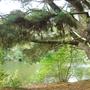 Virginia_Water_Lake_5.jpg