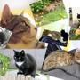 Summer_cats_pets