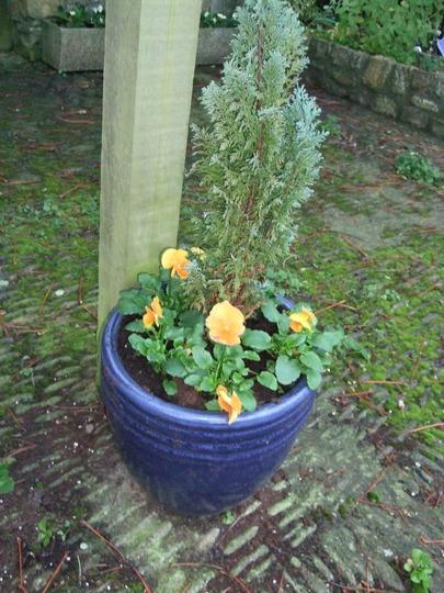 Pot replanted.