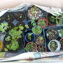 My home-made coldframe  26th Oct  09